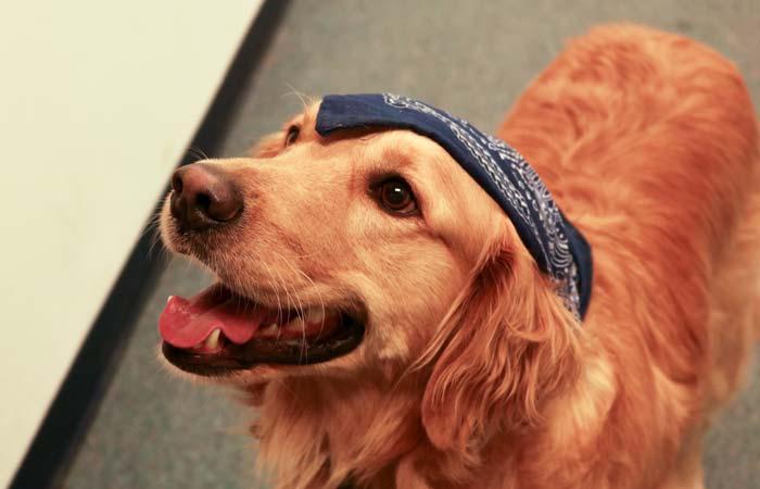 dog-therapy-cornerstone
