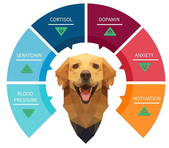 dog-therapy-cornerstone-7